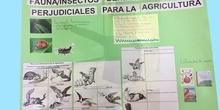 Fauna/insectos y la agricultura. Olivia 2B