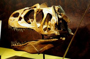 Allosaurus (Dinosauria, Theropoda), Museo del Jurásico de Asturi