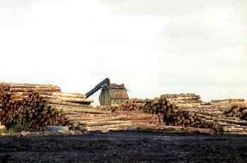 Procesamiento maderero en la isla norte, Nueva Zelanda