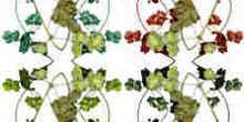Superposición de ramas en tres colores