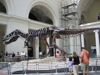 Museo de Historia Natural, Chicago, Estados Unidos