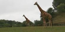 Los animales y su hábitat -2