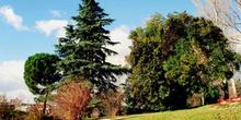 árboles y arbustos en pendiente
