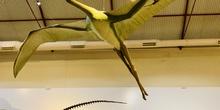 Excursión al Museo Nacional de Ciencias Naturales 9