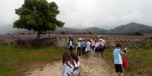 Camino de Santiago 26