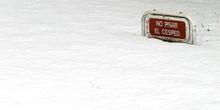 Césped cubierto de nieve