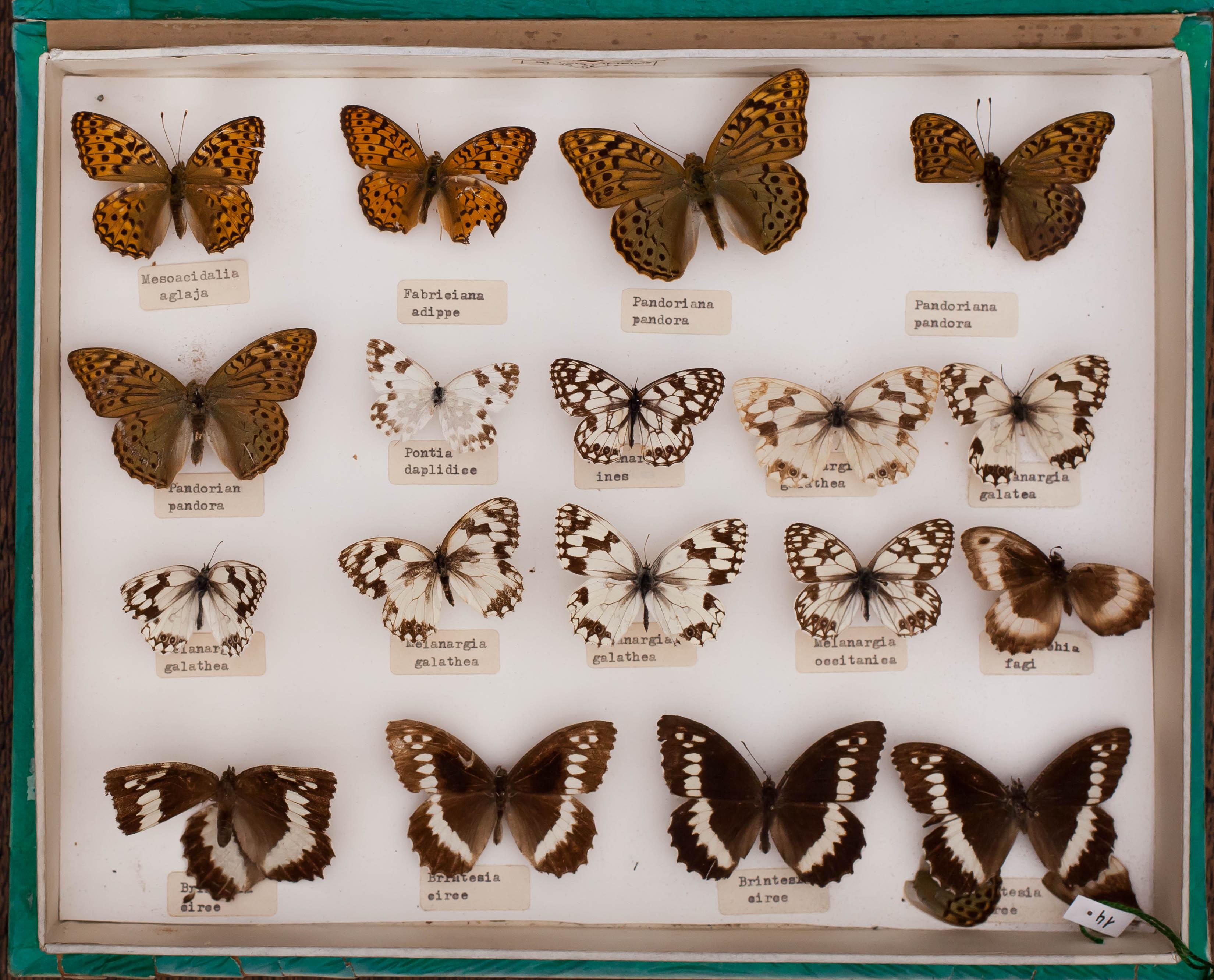 IES_CARDENALCISNEROS_Insectos_004