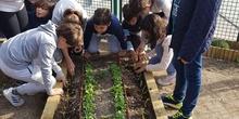5º PLANTA EN EL HUERTO_CEIP FDLR_LAS ROZAS 5