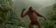 Monkey ágil