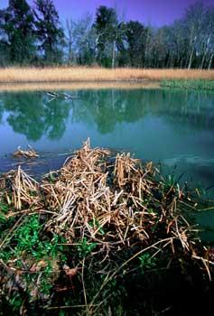 Reserva natural de El Regajal-Mar de Ontígola