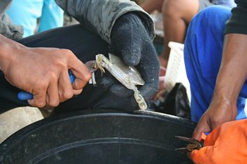 Cortando las patas de un cangrejo, Jakarta