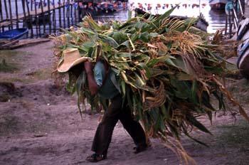 Hombre acarreando maíz en San Pedro La Laguna, Guatemala