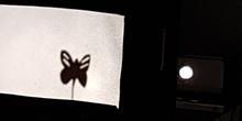 Los pulpos y las sombras chinas 9