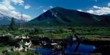 Humedal en las Montañas Rocosas