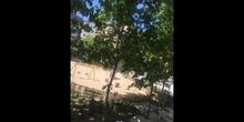 Oda a un árbol, Noemí Tiérrez