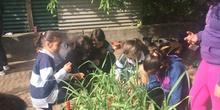 2019_05_Los alumnos de 4º en el Huerto_CEIP FDLR_Las Rozas 42