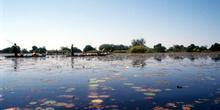 Laguna de Nenúfares, Botswana