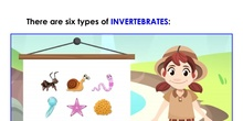 There are six types of INVERTEBRATES
