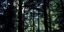 Bosque cerrado en las Montañas Rocosas, Canadá