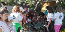 5º A en el huerto_CEIP FDLR_Las Rozas 1