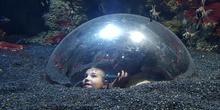 Aquarium Xanadú II 3ºB  14