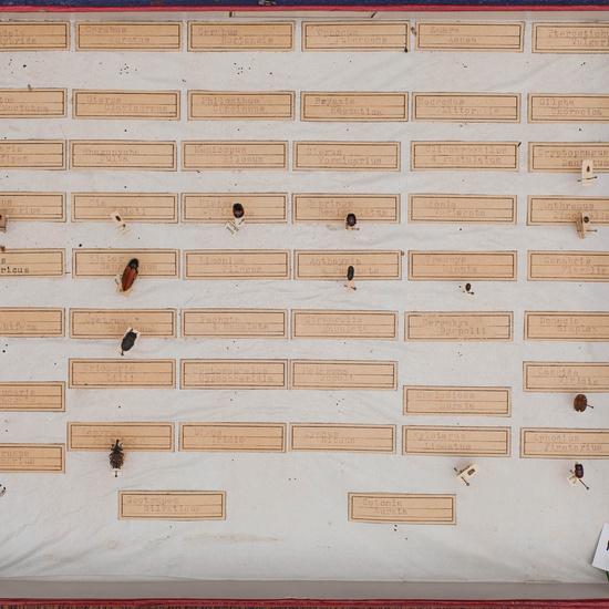 IES_CARDENALCISNEROS_Insectos_024