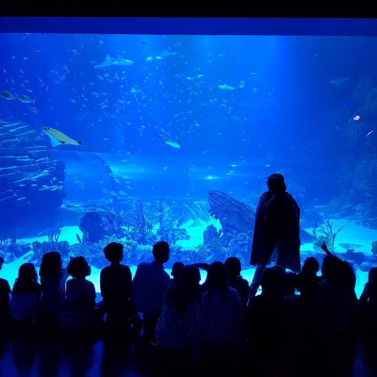 Aquarium Xanadú II 3ºB  1