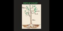 PRIMARIA - 2º - PLANTS - CIENCIAS DE LA NATURALEZA - FORMACIÓN