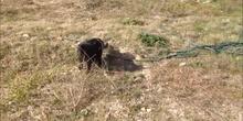Mi gato Pepe comiendo hierba
