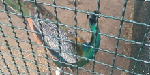 Visita a la granja 11