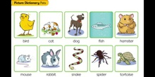 Flashcards Unit 3- PETS
