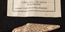 IES_SANISIDRO_MUSEO_Prehistoria_029
