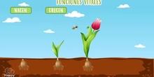 El reino de las plantas. Características