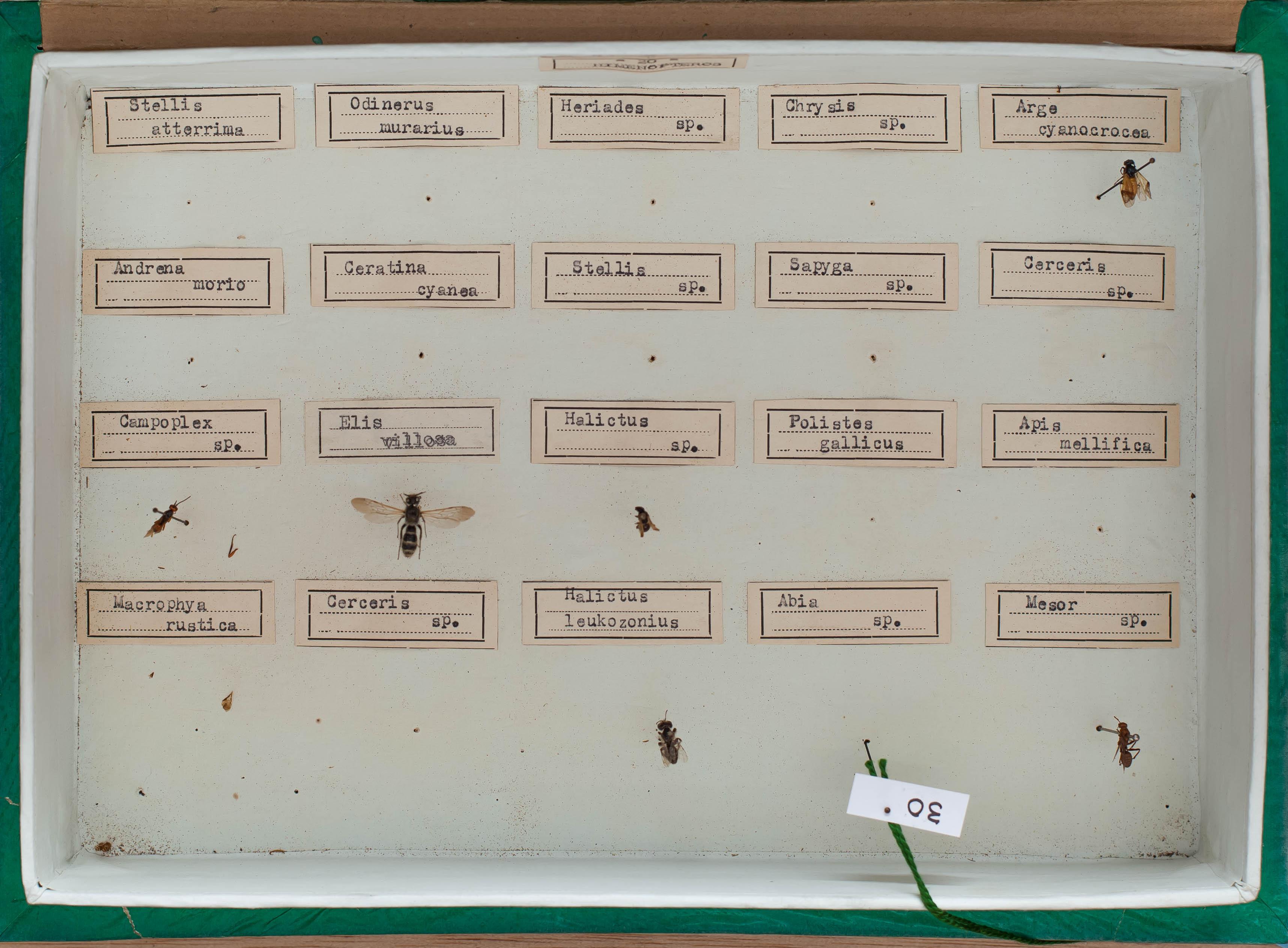 IES_CARDENALCISNEROS_Insectos_022
