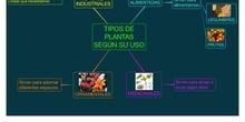 PRIMARIA 1º - VALORES - TIPOS DE PLANTAS SEGÚN SU USO