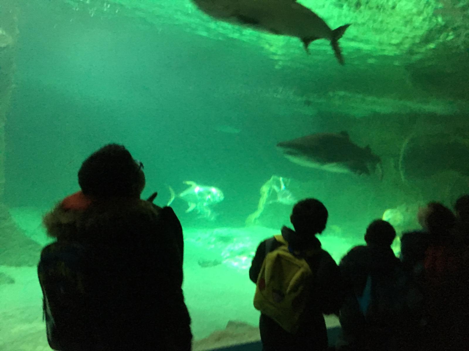 Excursión al zoo 5 años, 1º y 2º Luis Bello 36