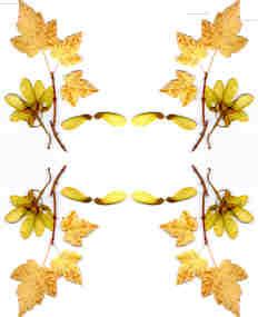 Simetría vertical y horizontal