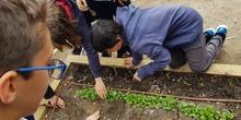5º PLANTA EN EL HUERTO_CEIP FDLR_LAS ROZAS