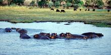 Fauna en Chobe, Botswana