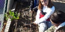 2019_11_08_4º empieza el mes de noviembre de forma muy ecológica_CEIP FDLR_Las Rozas 6