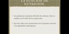 6º naturales función de nutrición, aparato excretor