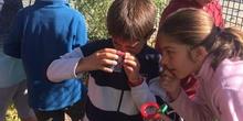 2019_06_11_4º observa insectos en el huerto_CEIP FDLR_Las Rozas