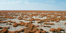 Mar de líquenes, Namibia