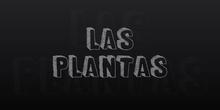 Las plantas 1º