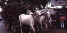 Carro de bueyes por las calles de Agra, Agra, India