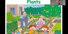 NATURAL SCIENCES 1 - UNIT 6 - Plants