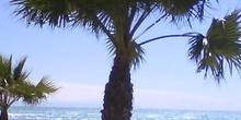 Caribe en España