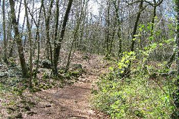 Fageda d´en Jorda de Santa Pau: extenso bosque de hayas, Garrotx