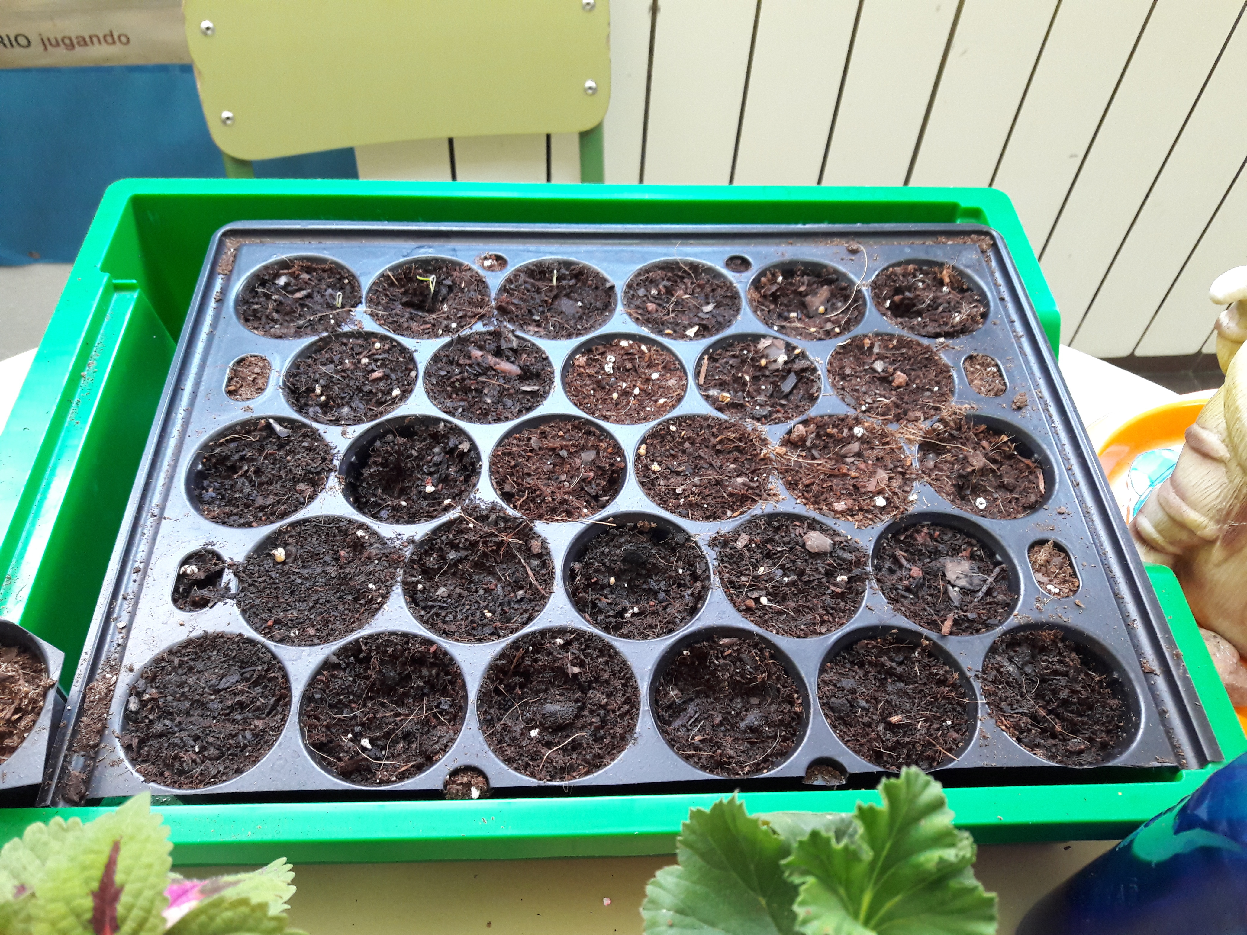 We grow plants in the classroom 5