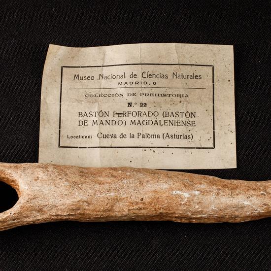 IES_SANISIDRO_MUSEO_Prehistoria_035